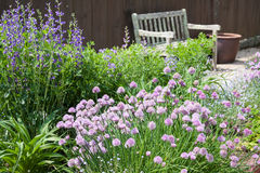 http://www.dreamstime.com/royalty-free-stock-photo-herb-garden-chives-blossoming-image31943595