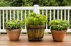 http://www.dreamstime.com/royalty-free-stock-photography-home-herb-garden-containing-large-flat-leaf-basil-plants-horizontal-photo-consisting-italian-growing-pots-cedar-deck-image32686177