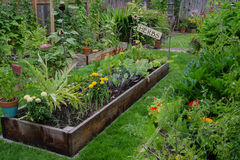 http://www.dreamstime.com/royalty-free-stock-photo-garden-garden-raised-bed-filled-herbs-vegetables-nestled-center-two-other-narrow-gardens-rustic-delightful-image32900255